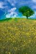 sviluppo ecologico