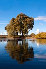 Eiche am See im Herbst