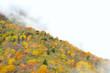 紅葉の秋 B