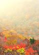 紅葉の秋 E