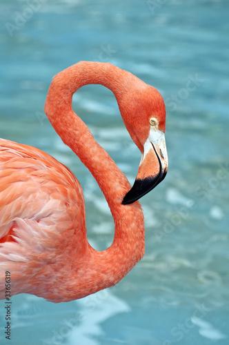 Foto Spatwand Flamingo Pink Flamingo.