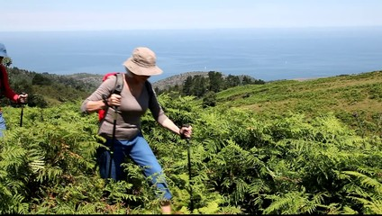Senior people hiking in ferns