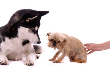 zwei Hund beim Kennenlernen