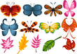 Set of butterfly and leaves