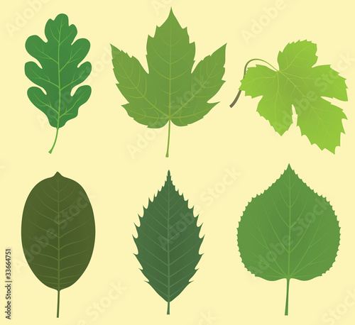 Collection of a typical continental leaves