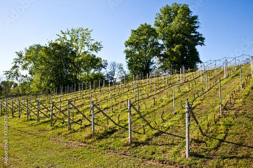Foto op Plexiglas Wijngaard Vineyard irrigation system