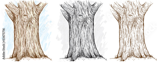 Three different versions of an illustration of a tree trunk