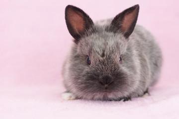 blue baby bunny