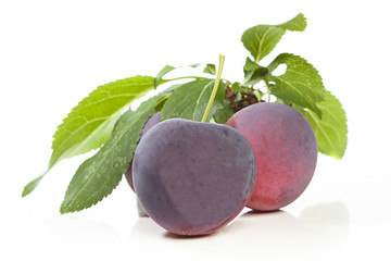 Plums or damsons fresh from the tree