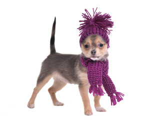 Chihuahua puppy dresses for cold winter weather