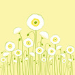 White poppy on yellow background