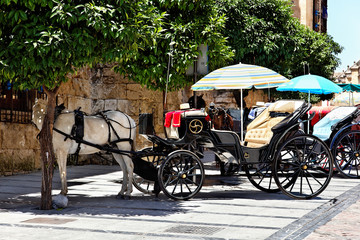 Pferdekutschen in Cordoba, Spanien