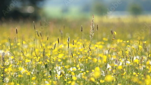 Meadow with flowers and wild grasses swaying with the wind