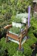 vecchia sedia con piante