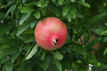 Frutti in giardino