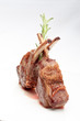 Lamb lion with thyme isolated on a white background