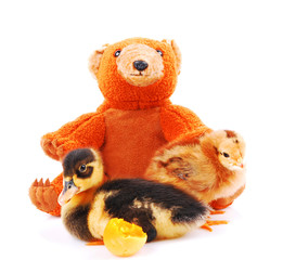 little duck and chicken nestled in a teddy bear