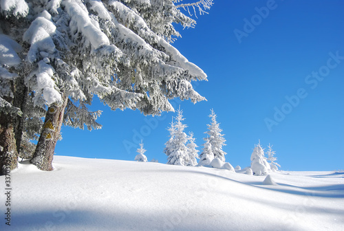 snowy mountain forest