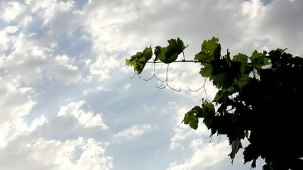 Cloud & Grapes Tree