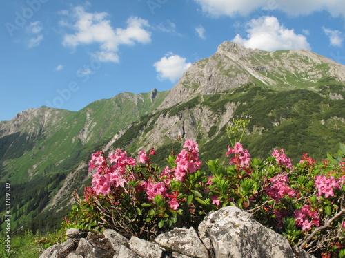 Alpenrosen © Andreas P