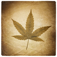 Cannabis leaf. Vintage background with torn edges. Isolated on w
