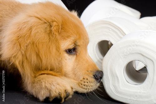toilet paper puppy