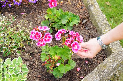 Fotobehang Purper Blumen & Blüten