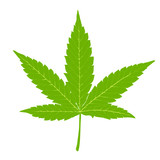 Cannabis leaf. Fully edutable by layers, vector (eps8).