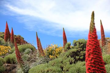 Tenerife plants
