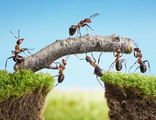 praca zespołowa, zespół mrówek mostu kosztującego
