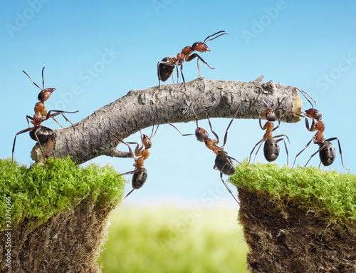 Leinwanddruck Bild teamwork, team of ants costructing bridge
