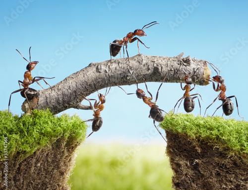 teamwork, team of ants costructing bridge