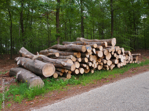 logs on roadside