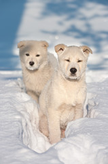 Two puppy dogs wandering.