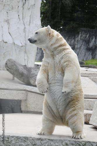 Fotobehang Ijsbeer Eisbär
