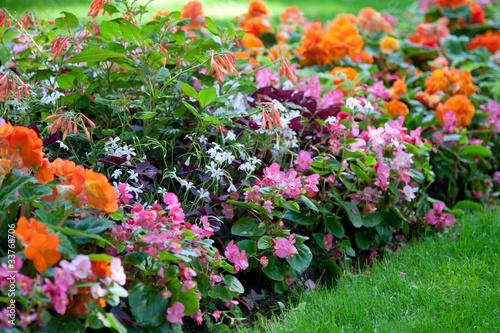 Herrliches Blumenbeet