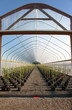 Greenhouse plant nursery, Oregon
