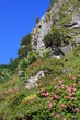 blütenpracht in den alpen