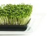 Kitchen cress