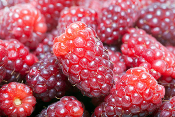 Closeup berries background