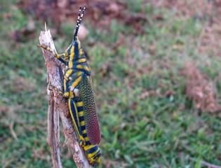 colorful grasshopper sitting