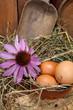 composizione con uova fresche