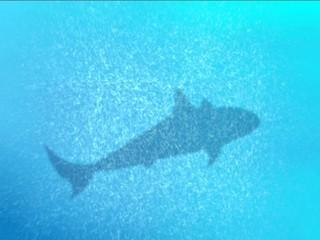 Ombra nitida di squalo sott'acqua