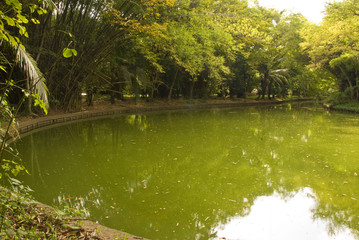 Lake in the middle of the garden