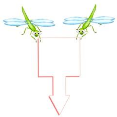 libellula tris