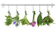 Drying Herb Bunches