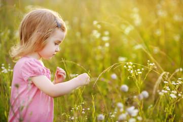 Adorable preschooler girl in a meadow at summer or autumn
