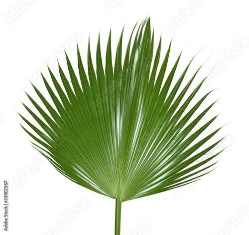 Fotobehang Palm boom Palm Leaf