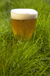 Beer in grass