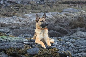 dog on a rocky outcrop